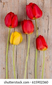 Five tulips on wooden background