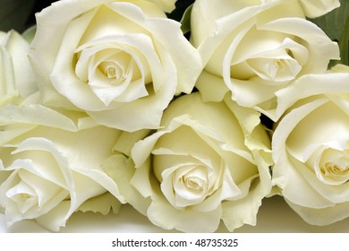 Five white roses close up