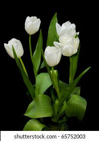 five white tulips on black