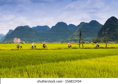 Five women ride bicycle in the rice field in Lang Son, Vietnam