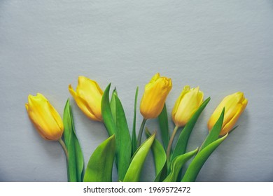 Five yellow fresh tulips on a silver grey background. Concept of holiday, March 8, International womans day. Card with copy space. Colors of the 2021 year