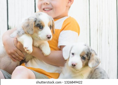 A five-year-old boy sits on a lawn surrounded by corgi puppies against a white fence. Friendship of animals and children.
