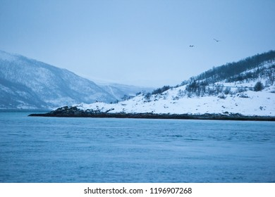 Fjords of Norway in winter, birds are flying, moody day