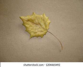 Flaccid yellow leaf on brown background