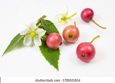 Indian Prune Fruit