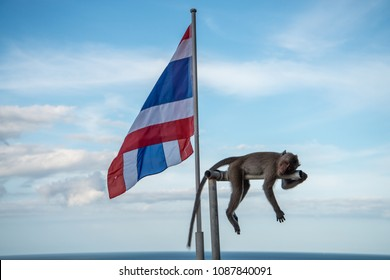 The flag of the Kingdom of Thailand with a monkey resting on a nearby pole