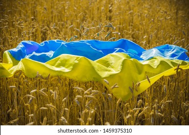 flag of Ukraine is blue-yellow lying on ripe wheat. Yellow wheat field in Ukraine. Independence Day of Ukraine, flag day.