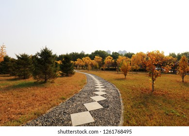 flagstone road in the park