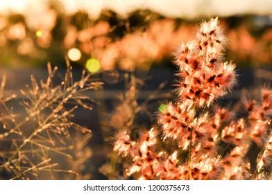 Flair on flower