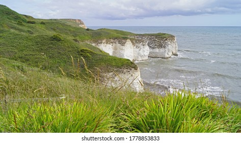 Flamborough Cliffs Nature Reserve is Home to one of the most important seabird colonies in Europe.