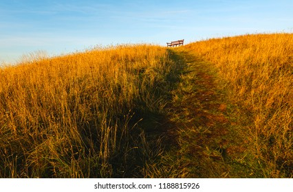 Flamborough, Yorkshire, UK. Seat with a view flanked by tall grasses and cliff tops overlooking the North Sea in autumn, Flamborough, Yorkshire, UK.