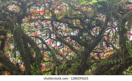 Flamboyant twigs with flowers