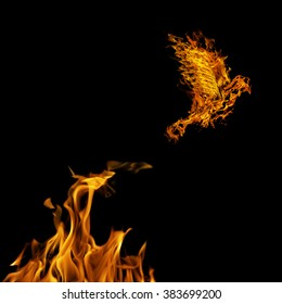 flame dove flying from yellow fire isolated on black background