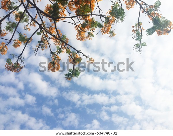 Flame flower on cloudy blue sky background