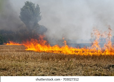 Flame row in a Wheat field burning Blackened and completely burnt