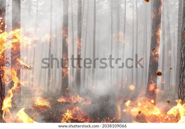 Llamas y fuego en un bosque en llamas