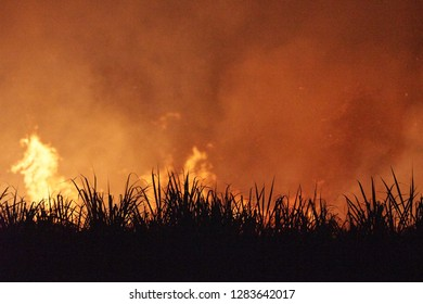 Flames and smoke at night, during the burning of a sugarcane field, on Goodwood Island, NSW, Australia.  The sugar cane is burnt prior to harvest. Sugar cane is the world's largest cash crop.