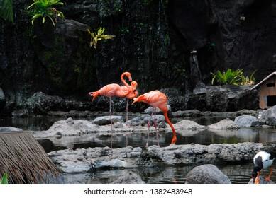 Flaminggo found in East Java park Batu Malang