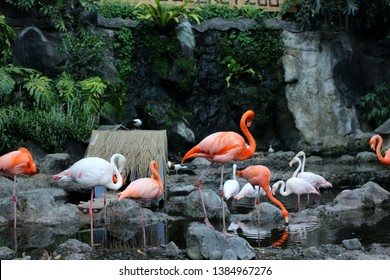 Flaminggo who lives in one of the zoo