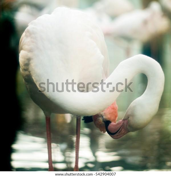 Flamingo Bingo