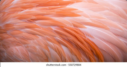 Flamingo feather background