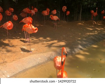 Flamingo gathering in a pond