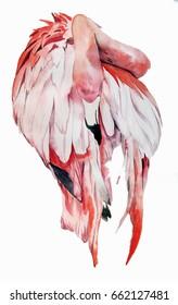 Flamingo illustration in watercolor