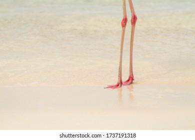 Flamingo legs on the beach