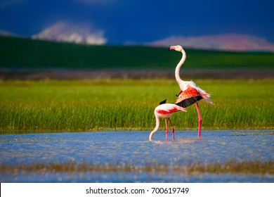 Flamingo and nature. Green, blue, purple nature bacground.