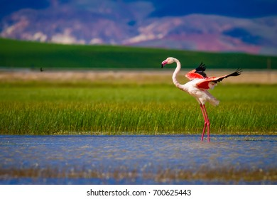 Flamingo and nature. Green, blue, purple nature background.