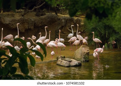 Flamingo on the lake