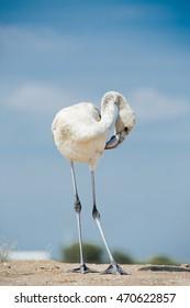 Flamingo on the lake shore