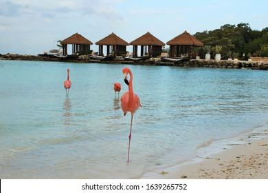 Flamingo on One Leg at Aruba Island