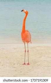 Flamingo on a tropical beach