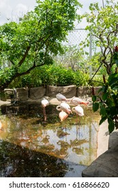 Flamingo in the Park