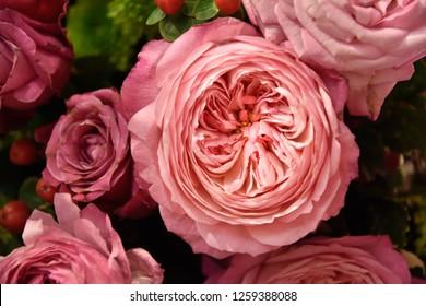 flamingo pink juliet roses