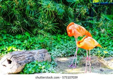 Flamingo prink