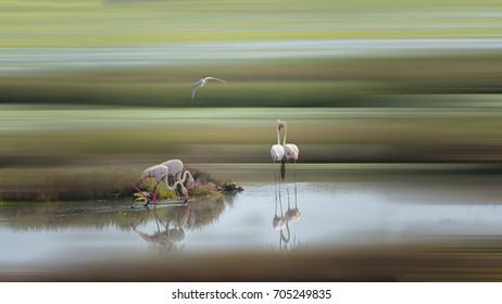 Flamingo and reflection