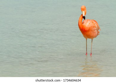 A flamingo standing in shallow water