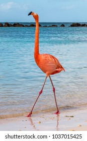 Flamingo strutting his stuff on the beach.  Standing tall.