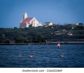 Flamingo -  Views around Curacao a Caribbean Island