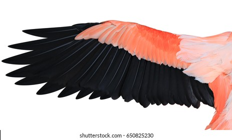 Flamingo wing pink and black color isolated on white background, This has clipping path.