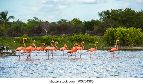 Flamingoes at Celestun Biosphere Reserve, Yucatan, Mexico