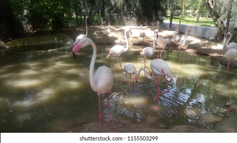 Flamingoes are a type of wading bird in the family Phoenicopteridae