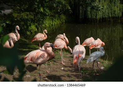 Flamingos by lake, zoo holidays