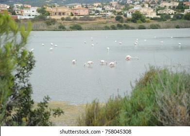 flamingos, costa blanca - Spain