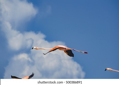Flamingos flying in the cloudy blue sky