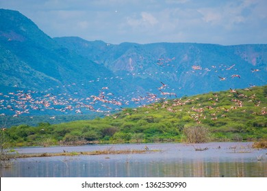 Flamingos flying over lake bogoria kenya