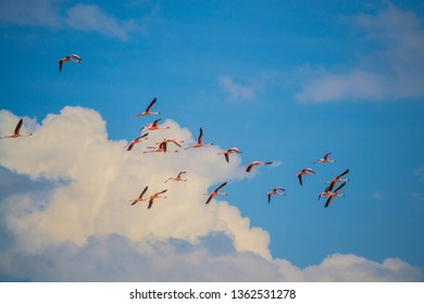 Flamingos flying in the sky