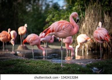 Flamingos in Frankfurt Zoo